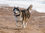 Photo Challenge:Pets