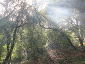 Sun shines through the woods at Holyford Woods Local Nature Reserve