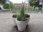 Plants in pots in front of the Q.E.II. Centre