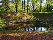 Autumn leaves at Woodbury Castle