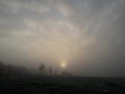 Fog rise