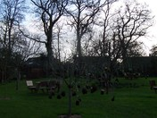Kokedama at the orchard in A La Ronde