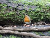 Wildlife at Lackford Lakes