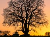 Salhouse Sunset