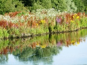 Wildflowers reflected in Lackford lake.(challenge)