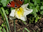 Lovely Flowers and Butterfly
