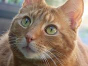 Tommy my pet cat