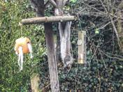 Project 52 Acrobatic squirrel