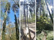 Weekend Woods Walk