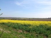 Views from Water Lane , Kersey