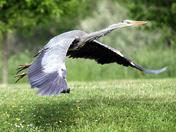 Birdie on the golf course!