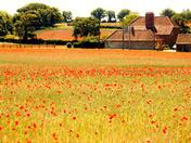 Poppyland