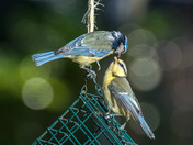 Birds in my garden