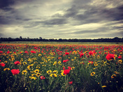 Field of colour