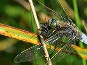 crunchy fly