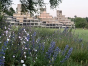 Ziggurats & Wild Flowers