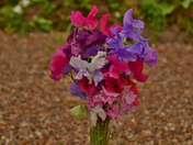 Sweet Pea Display