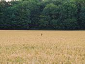 The field next door