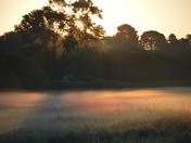 misty meadows at sunrise