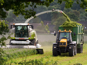 Harvesting Silage. project 52