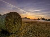 A Strumpshaw field. Project 52