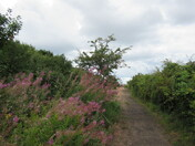 "Along the ""East Devon Way"" footpath by the Exe Estuary"