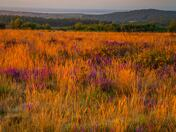 Morning light on the heath.