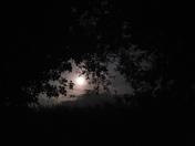 Night sky over Tittleshall