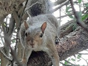 Inquisitive Squirrel.