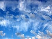 Jelly Fish Sky