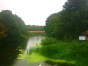 Andersons meadow along the wensum