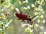 Beetle climbing plant