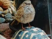 Birdie Back Ride