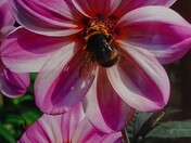 Bee's nectar.