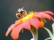 Just bumblebees