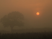 Misty morning on Ferry Road on the way to Reedham ferry.