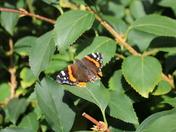 Butterfly sunbathe