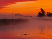 Sunrise At Beccles With Swan