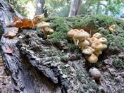 Fungus fungus
