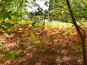 Nearly Autumn