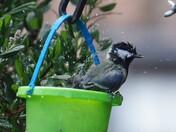 Bathing in a bucket!