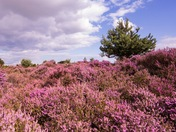 A beautiful day at Dunwich Heath