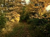 Autumn project 52