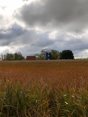 Mill in the reeds