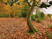 PROJ 52, AUTUMN, IN HOLT COUNTRY PARK