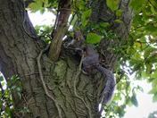 Busy Squirrel