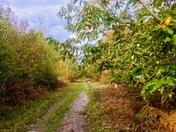 Walk in Rendlesham forest