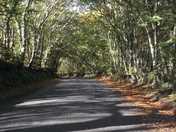 Leafy lane on Muttermoor