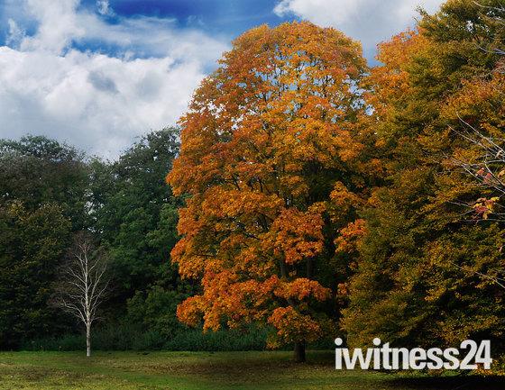 Various Autumnal & Sunset Shots