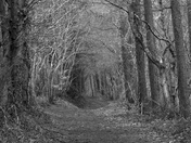 Stags Head Woodland